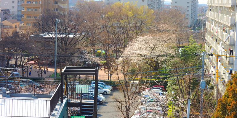 近くのマンションの桜