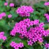 アトリエの入り口に咲く花